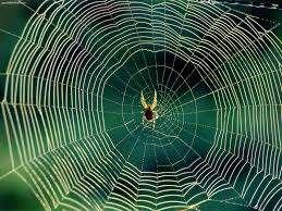 spiderweb w spider